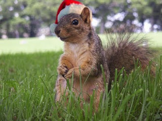 squirrel+Christmas